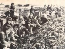 03-Сбор-урожая
