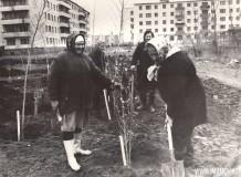 26-Горзеленстрой-посадка-тополей-в-мкр.-1-октябрь-1981-год