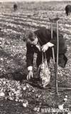 44-Сбор-урожая